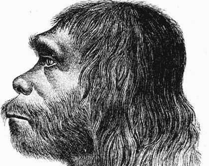 Cómo la regulación genética nos distinguió de los neandertales