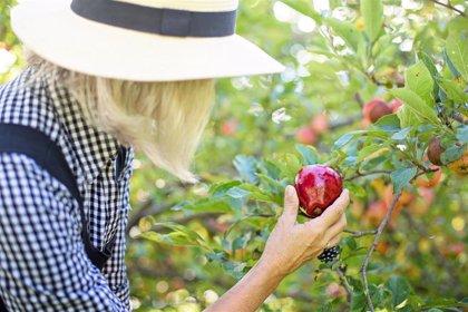 Los beneficios para la salud de tener un huerto en casa