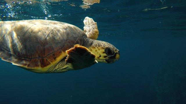 AV.- El cambio climático subirá un metro el nivel del mar Mediterráneo en 2100 y afectará a 500 millones de personas