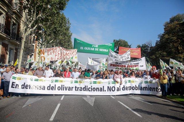 Manifestación en defensa del olivar tradicional en Madrid ante la crítica situación del sector por los bajos precios en origen del aceite de oliva
