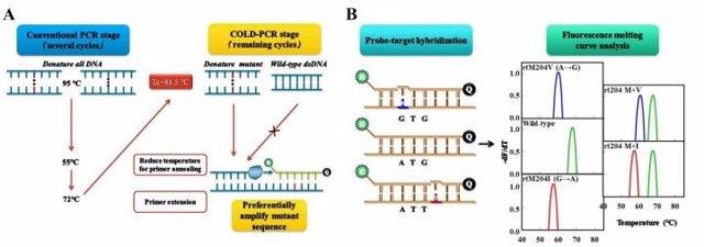 Este es un flujo de trabajo esquemático para la coamplificación a una temperatura de desnaturalización inferior PCR (COLD-PCR) / análisis de curva de fusión de fluorescencia