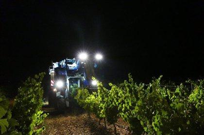 """La DO Rueda finaliza la vendimia con la recogida de 113.720 kilos de uvas en un """"excelente estado sanitario"""""""