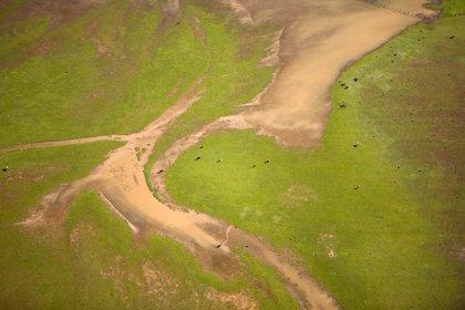 Cambio climático.- WWF, Cosentino, Acosol, Martínez Linares, Centro Forestal de Cazorla y Jesús Vozmediano, Premios Medio Ambiente