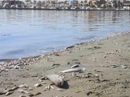 """Ecologistas asegura que el Mar Menor se muere por la """"inacción"""" institucional y su complicidad con sector agrario"""