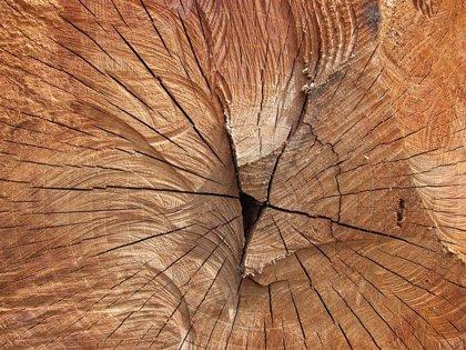 La exposición itinerante 'La memoria de los árboles', de la DPH, se puede ver hasta el 27 de octubre en Aínsa