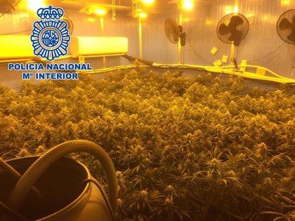 La Policía desmantela en Sanlúcar de Barrameda (Cádiz) un cultivo 'indoor' con 149 plantas de cannabis