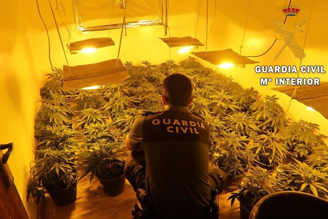Plantación in door de marihuana localizada en Pechina (Almería)