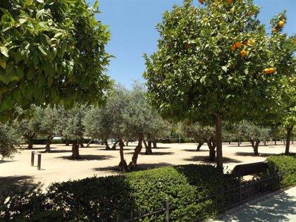 Científicos de la Universidad de Granada detectan aumento de alergias cruzadas entre árboles y frutos en las ciudades
