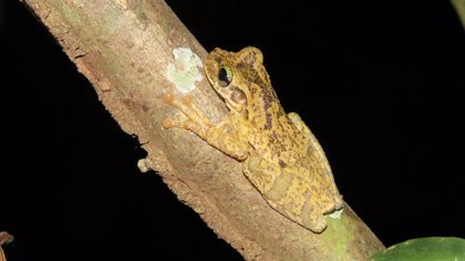 AMUS forma parte de un proyecto de cooperación internacional en la selva amazónica de Perú