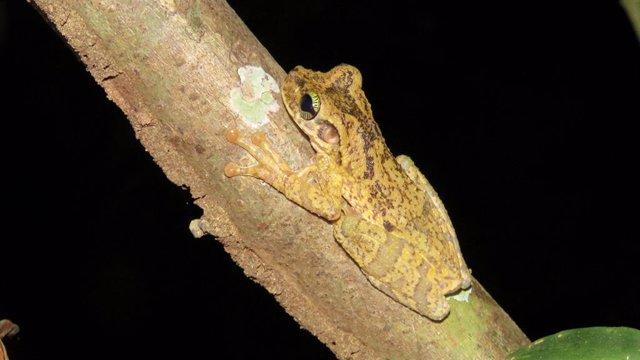 AMUS forma parte de un proyecto de cooperación internacional en la selva amazóni