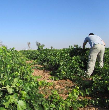 Los trabajadores de campañas agrarias en C-LM aumentan un 4% respecto a 2019