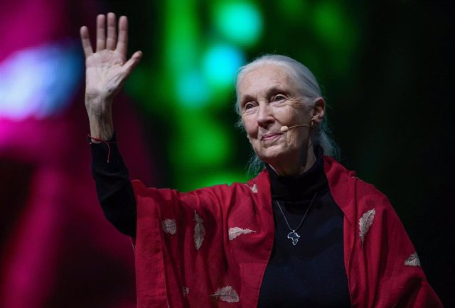 """21 June 2019, Bavaria, Munich: British behavioural scientist Jane Goodall delivers a speech during the """"Reasons for Hope"""" lecture as part of her global tour in hope that she could inspire people for their field of research. Photo: Sven Hoppe/dpa"""