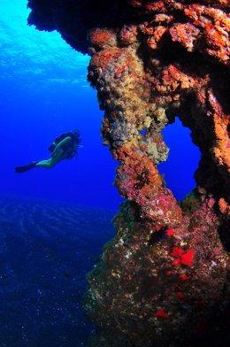 Levantan la restricción para bucear en la reserva marina del Mar de las Calmas (
