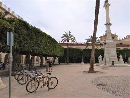 El Pleno de Almería aborda de nuevo los cambios en la Plaza Vieja para sacar sus árboles y el Pingurucho
