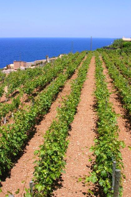 UPA-UCe Extremadura aplaude el cumplimiento del pago de las ayudas de la PAC a los agricultores