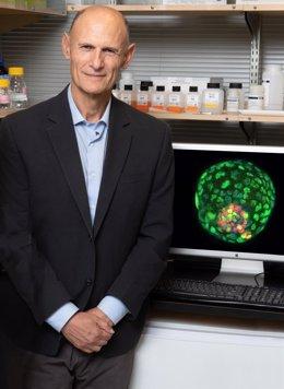 El doctor Izpisua ante la imagen del blastoide fruto de la investigación