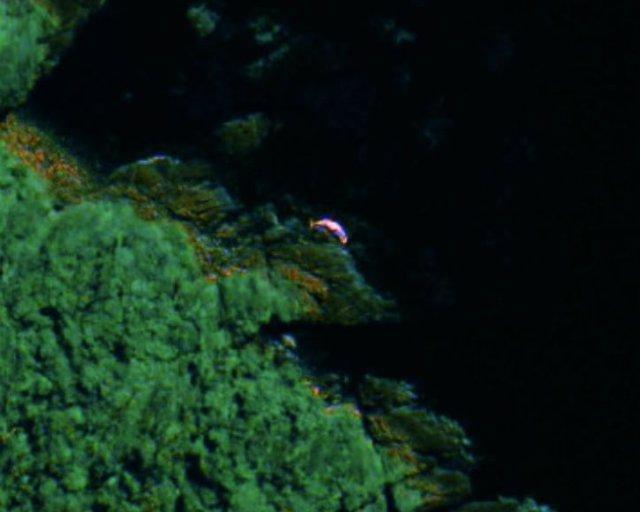 Imágenes por satélites para detectar ballenas varadas en costas remotas