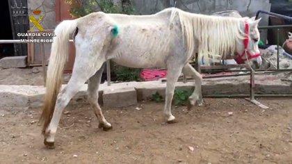 Detienen a una persona que tenía tres caballos y un rottweiler abandonados en Las Palmas de Gran Canaria