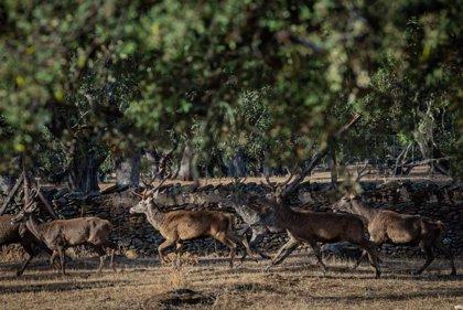 """Los cazadores recuerdan a los partidos políticos que """"la caza también vota"""" el próximo 10N"""