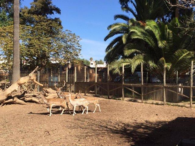 Gamos en el zoo de Ayamonte (Huelva)