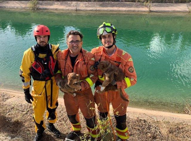 Bomberos rescatan a dos cachorros en el canal del Júcar
