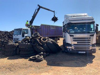 La Conselleria de Medio Ambiente retira 300 toneladas de neumáticos de una parcela a las afueras de Ciutadella