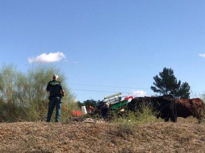 Cinco heridos en Dos Hermanas (Sevilla) tras volcar una carriola en la romería de Valme