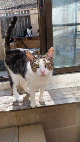 Gato, felino, foto de archivo