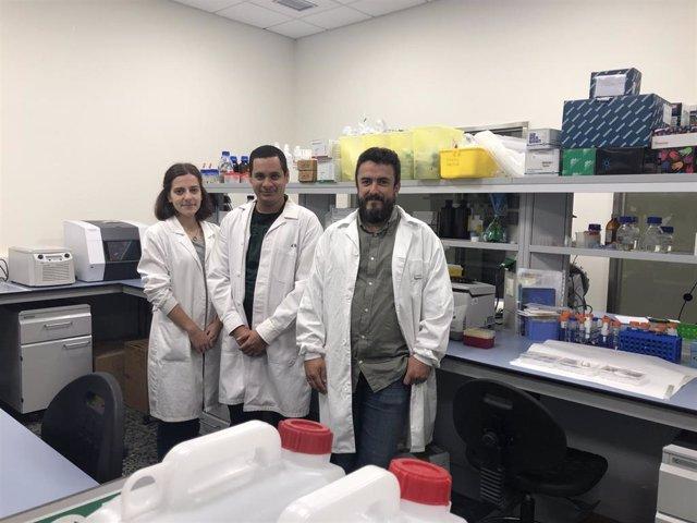 Investigadores del IDIS identifican fármacos capaces de eliminar selectivamente las células envejecidas.