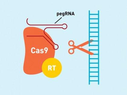 Una nueva técnica de edición del ADN podría corregir hasta el 89% de las enfermedades genéticas