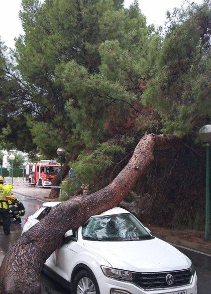La lluvia provoca la caída de un árbol sobre un coche en la calle Anguila de Alicante