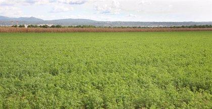 El Fogaiba pagará casi 11 millones de la Política Agraria Común de antemano