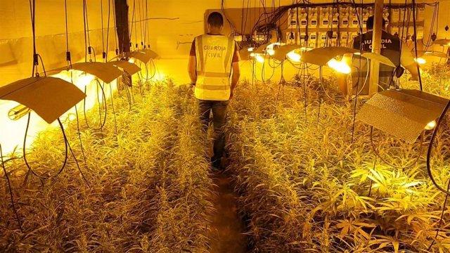 Plantación de marihuana intervenida en operación en el área metrpolitana de Granada