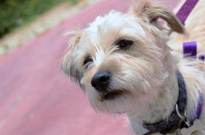 Madrid lanza el lunes una campaña sobre adopción de mascotas que se verá en autobuses, centros comerciales y cines