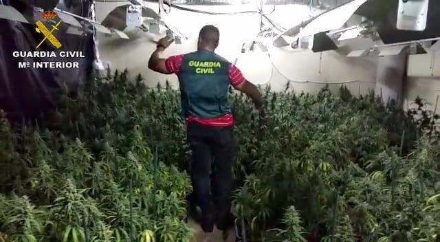 Plantación de marihuana incautada en Sanlúcar