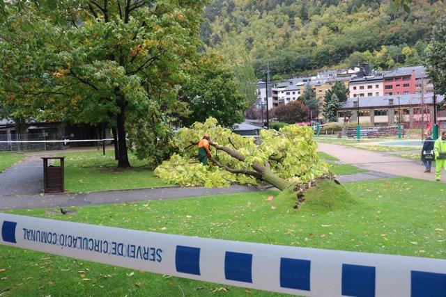 Un operari del Comú d'Andorra la Vella (Andorra) treballa en la retirada d'un arbre arrencat pel vent en el Parc Central