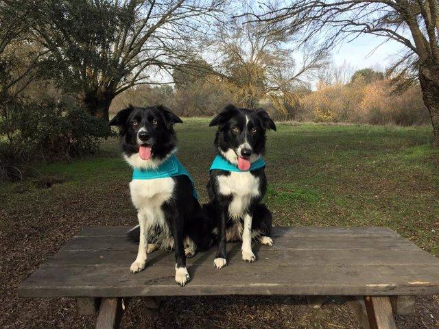 Annouk y Delfín, dos perros que participan en el proyecto 'La huella olfativa del cáncer'.