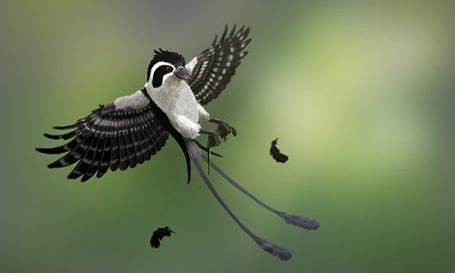Recreación de la nueva ave  recuperada en ámbar