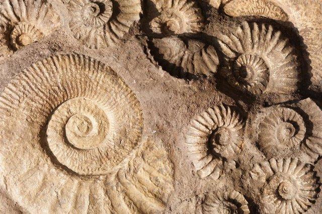 Nuevo proceso ilustra cómo se formaron los primeros fósiles