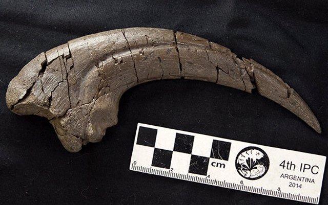 Garra fósil de 20 centímetros