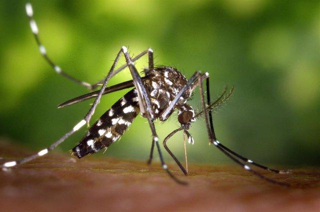 La Caixa es la impulsora del proyecto 'Big Mosquito Bytes'