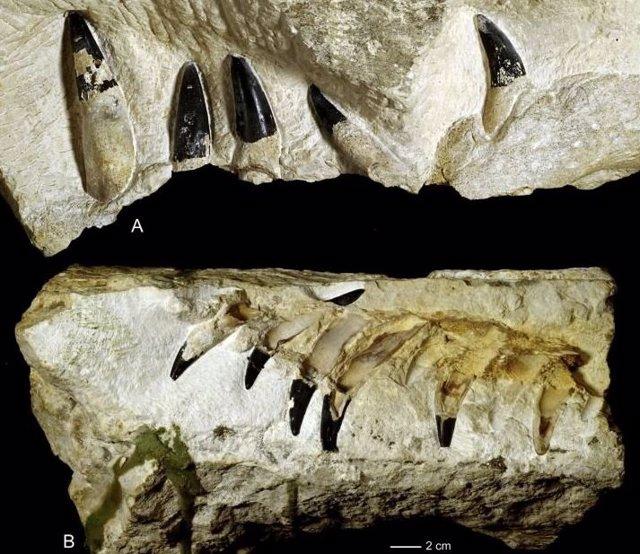 Restos de un monstruo marino de 150 millones de años aparecen en Polonia