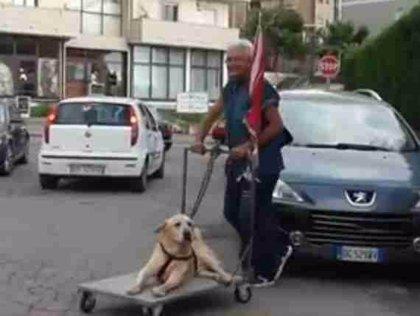 Este labrador, de 13 años, tiene artritis y su dueño construyó esta plataforma para pasearlo todos los días