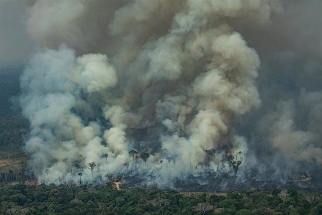 HANDOUT - 24 August 2019, Brazil, Rondonia: Smoke rises from the forest during a fire near the town of Caneiras do Jamari in Rondonia.  Photo: Victor Moriyama/Greenpeace Brazil/dpa -