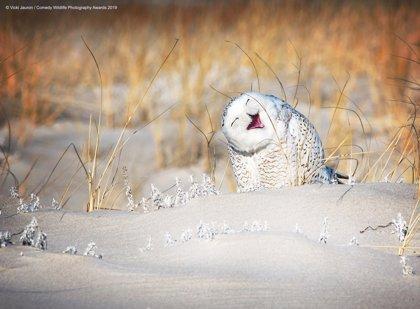 Un concurso de fotografías divertidas de animales para concienciar sobre el medio ambiente