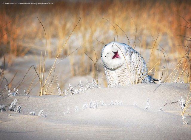 Una de las imágenes del concurso The Comedy Wildlife Photography Awards