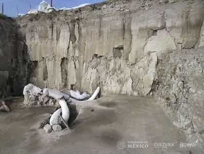 Excavado en México un complejo de trampas para mamuts de 15.000 años