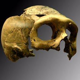 La extinción de los neandertales se vincula a las enfermedades humanas