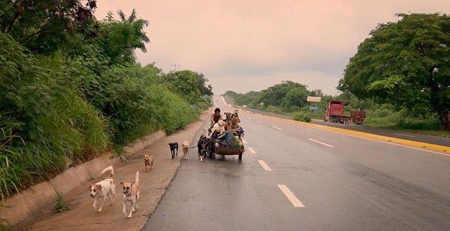 """Conoce a Edgardo Zúñiga """"perros"""", el hombre que recorre México para rescatar a los perros abandonados de la calle"""
