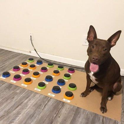 Esta patóloga del habla enseña a su perra a comunicarse a través de un panel de lenguaje y ya ha aprendido 29 palabras